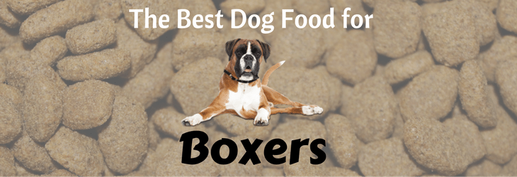 boxer feat img