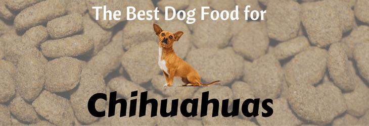 Chihuahuas-feat