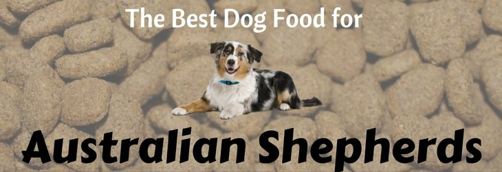 The Best Dog Food for