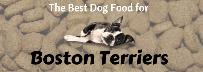 Best Wet Food For Boston Terriers